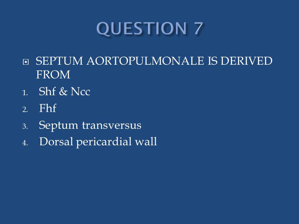  SEPTUM AORTOPULMONALE IS DERIVED FROM 1. Shf & Ncc 2. Fhf 3. Septum transversus 4. Dorsal pericardial wall