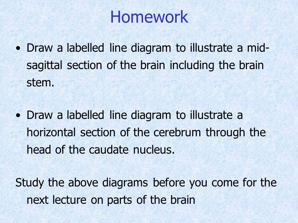 Homework Draw a labelled line diagram to illustrate a mid- sagittal section of the brain including the brain stem.