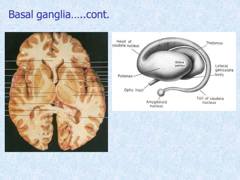 Basal ganglia…..cont.