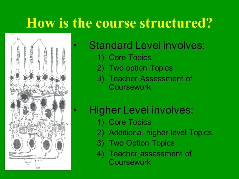 How is the course structured.