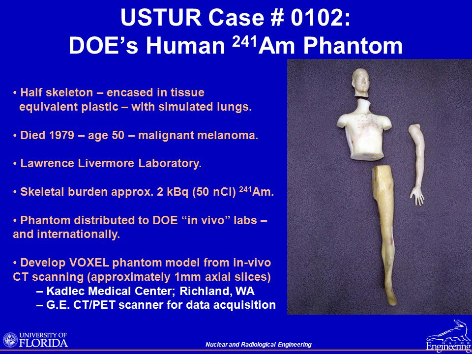 Nuclear and Radiological Engineering USTUR Case # 0102: DOE's Human 241 Am Phantom Half skeleton – encased in tissue equivalent plastic – with simulated lungs.