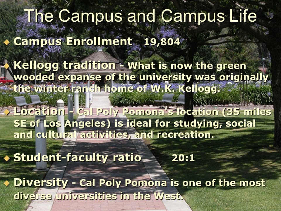  Campus Enrollment 19,804  Kellogg tradition - What is now the green wooded expanse of the university was originally the winter ranch home of W.K.