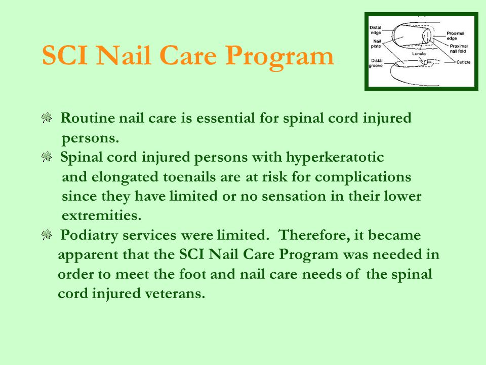 SCI Nail Care Program Routine nail care is essential for spinal cord injured persons.