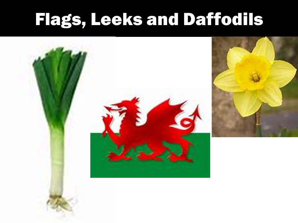 Flags, Leeks and Daffodils