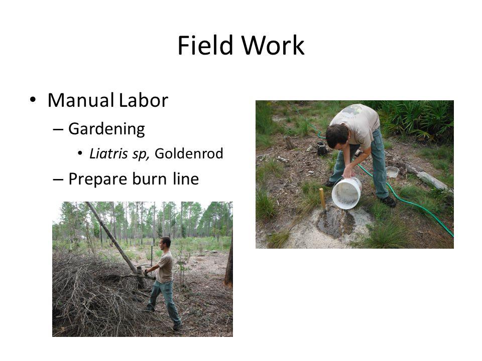 Field Work Manual Labor – Gardening Liatris sp, Goldenrod – Prepare burn line