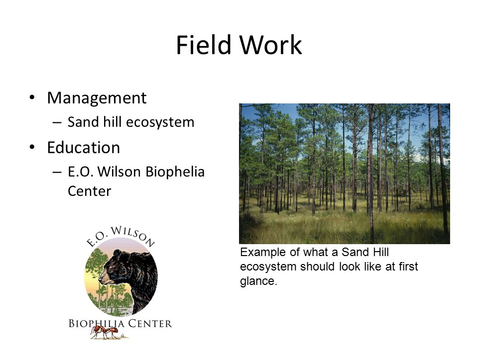 Field Work Management – Sand hill ecosystem Education – E.O. Wilson Biophelia Center Example of what a Sand Hill ecosystem should look like at first g