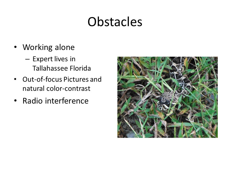 Obstacles Working alone – Expert lives in Tallahassee Florida Out-of-focus Pictures and natural color-contrast Radio interference