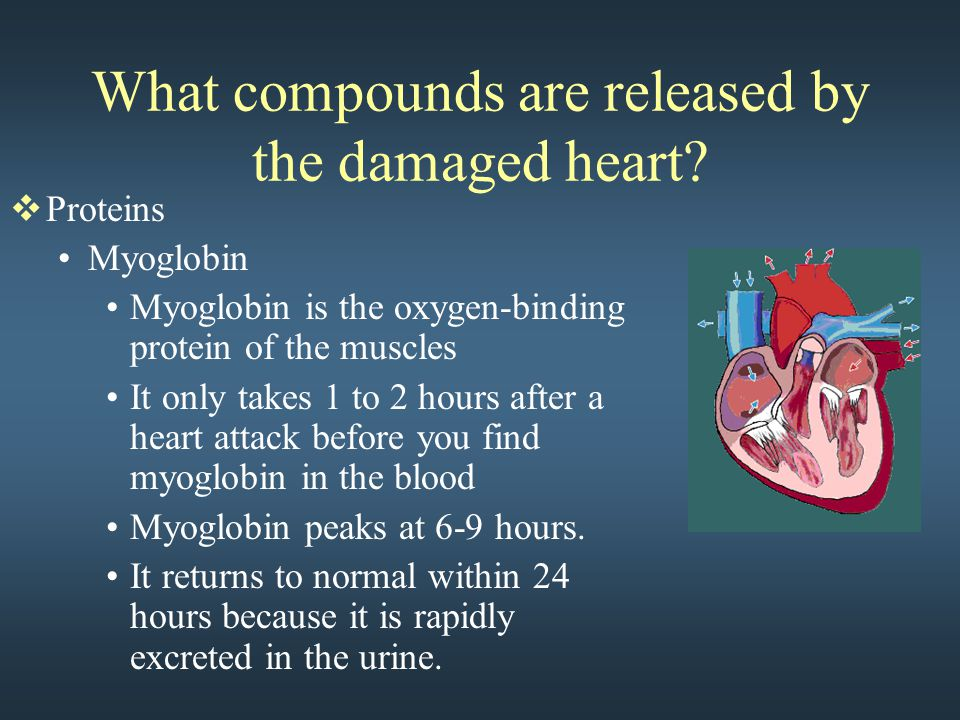What compounds are released by the damaged heart?  Proteins Myoglobin Myoglobin is the oxygen-binding protein of the muscles It only takes 1 to 2 hou
