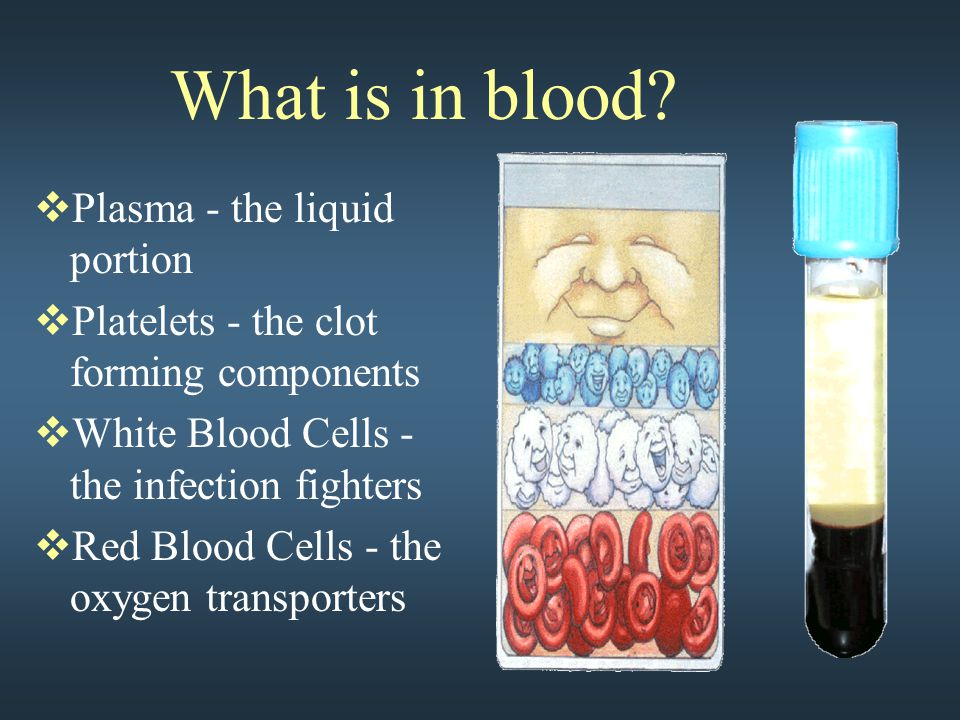 What is in blood?  Plasma - the liquid portion  Platelets - the clot forming components  White Blood Cells - the infection fighters  Red Blood Cel