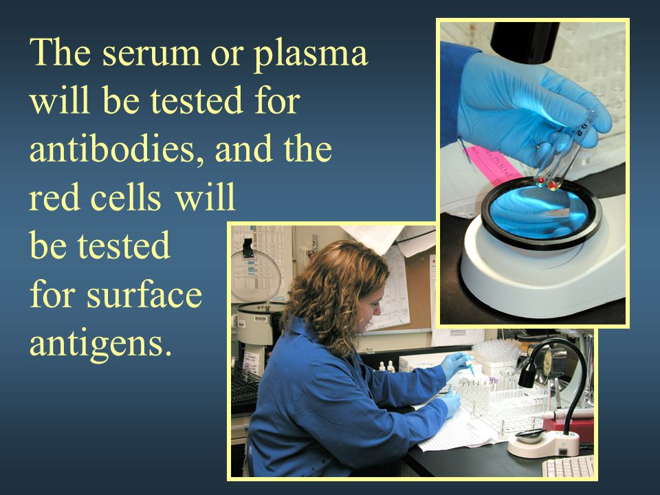 The serum or plasma will be tested for antibodies, and the red cells will be tested for surface antigens.