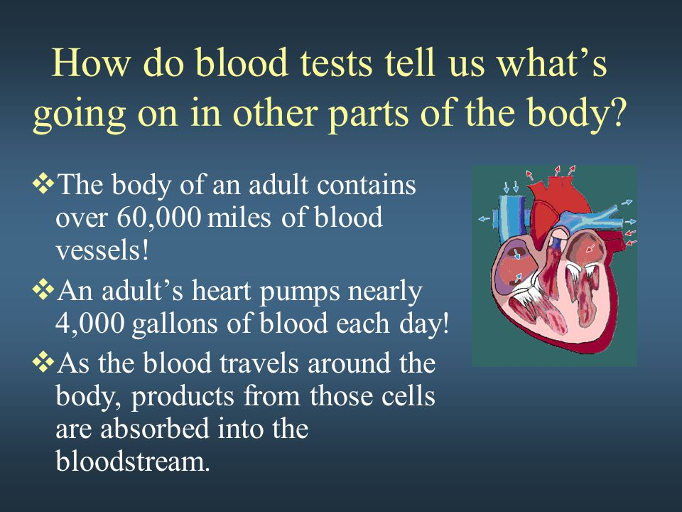  The body of an adult contains over 60,000 miles of blood vessels.