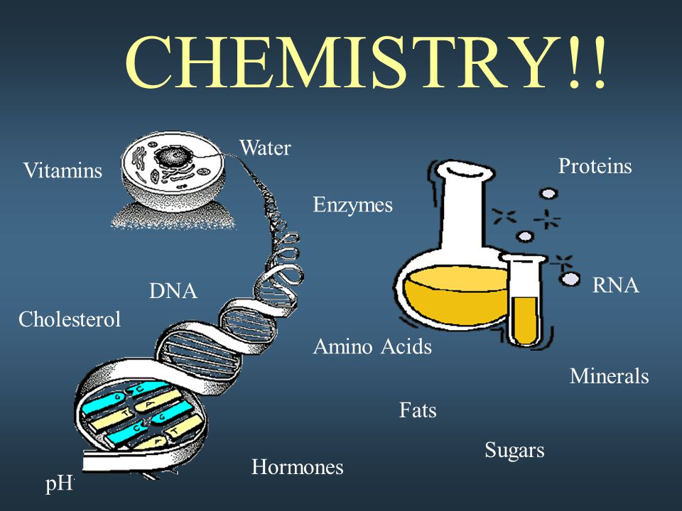 CHEMISTRY!! DNA Fats Proteins Sugars Amino Acids Water RNA Cholesterol Enzymes Vitamins Minerals pH Hormones