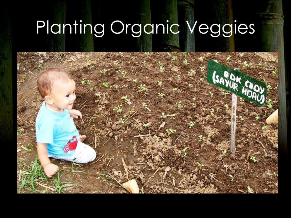 Planting Organic Veggies