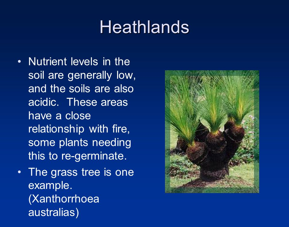 Heathlands Nutrient levels in the soil are generally low, and the soils are also acidic.