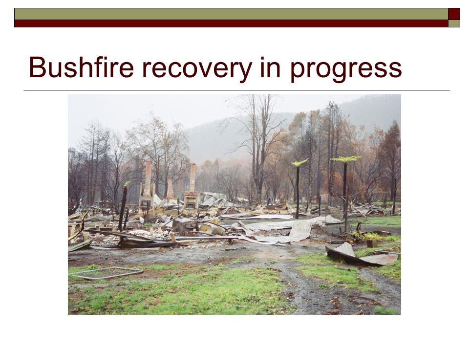 Bushfire recovery in progress