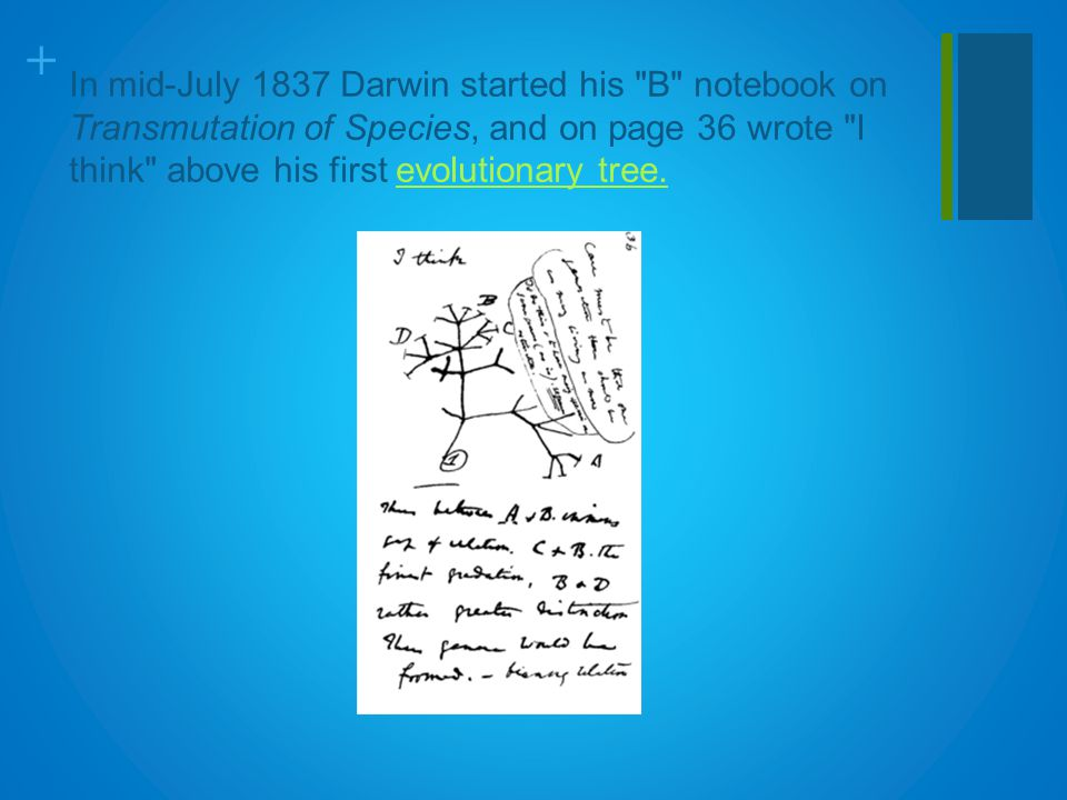 + In mid-July 1837 Darwin started his B notebook on Transmutation of Species, and on page 36 wrote I think above his first evolutionary tree.evolutionary tree.