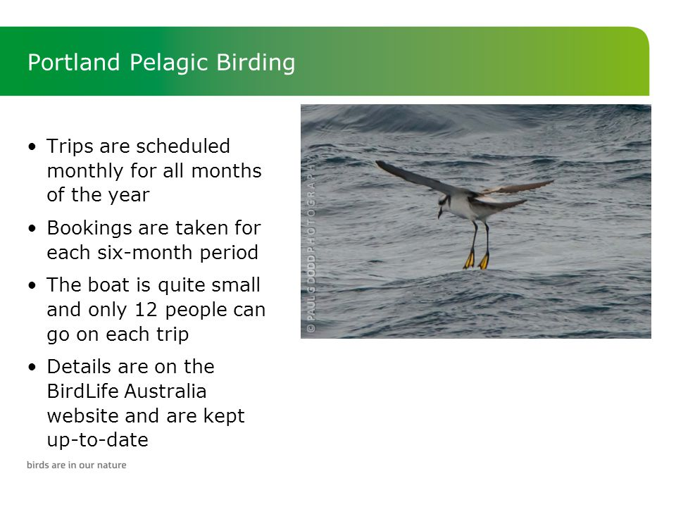 Portland Pelagic Birding Trips are scheduled monthly for all months of the year Bookings are taken for each six-month period The boat is quite small and only 12 people can go on each trip Details are on the BirdLife Australia website and are kept up-to-date