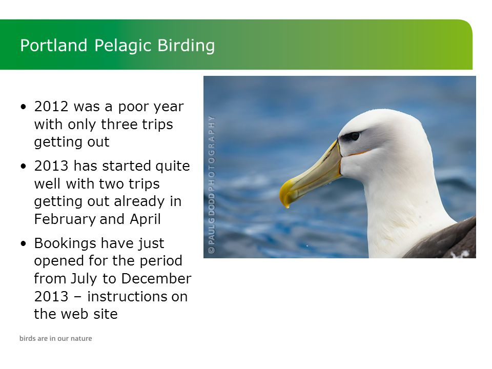 Portland Pelagic Birding 2012 was a poor year with only three trips getting out 2013 has started quite well with two trips getting out already in February and April Bookings have just opened for the period from July to December 2013 – instructions on the web site
