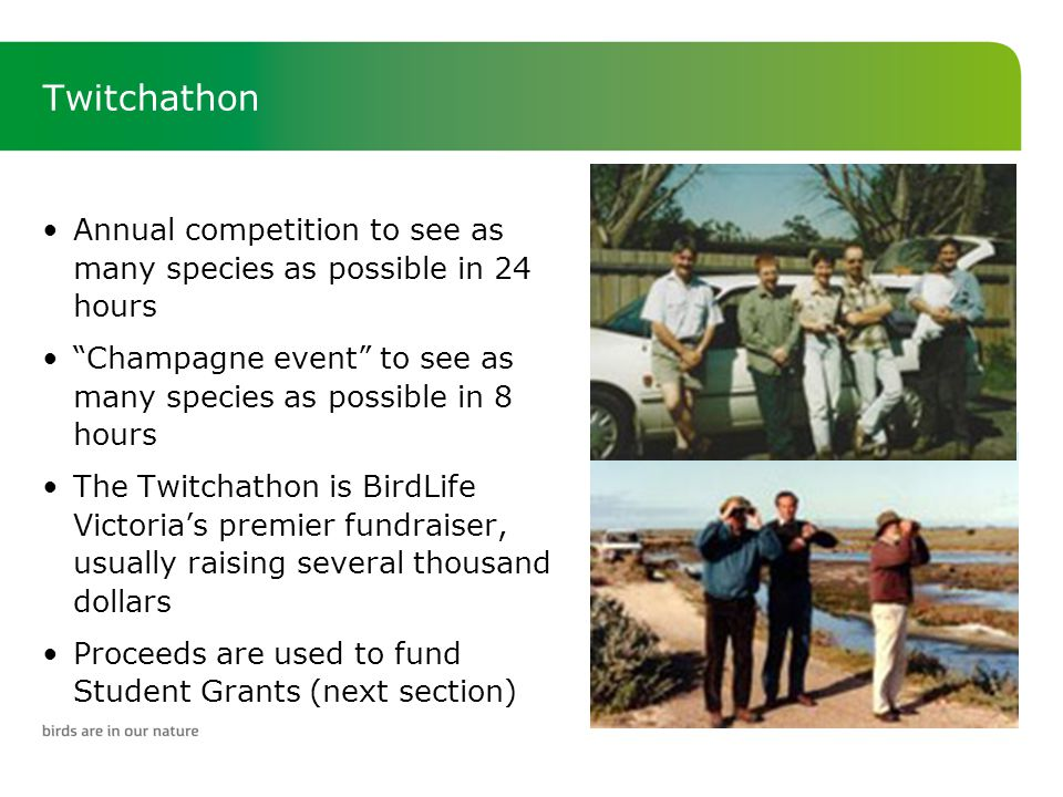 Twitchathon Annual competition to see as many species as possible in 24 hours Champagne event to see as many species as possible in 8 hours The Twitchathon is BirdLife Victoria's premier fundraiser, usually raising several thousand dollars Proceeds are used to fund Student Grants (next section)