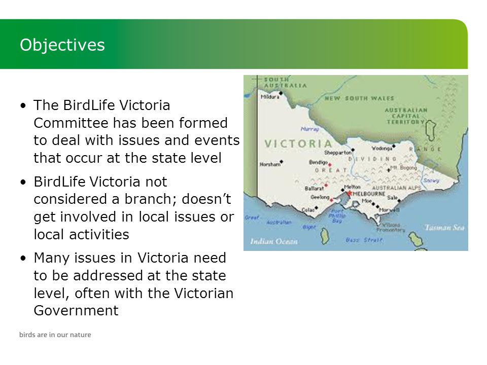 Objectives The BirdLife Victoria Committee has been formed to deal with issues and events that occur at the state level BirdLife Victoria not considered a branch; doesn't get involved in local issues or local activities Many issues in Victoria need to be addressed at the state level, often with the Victorian Government
