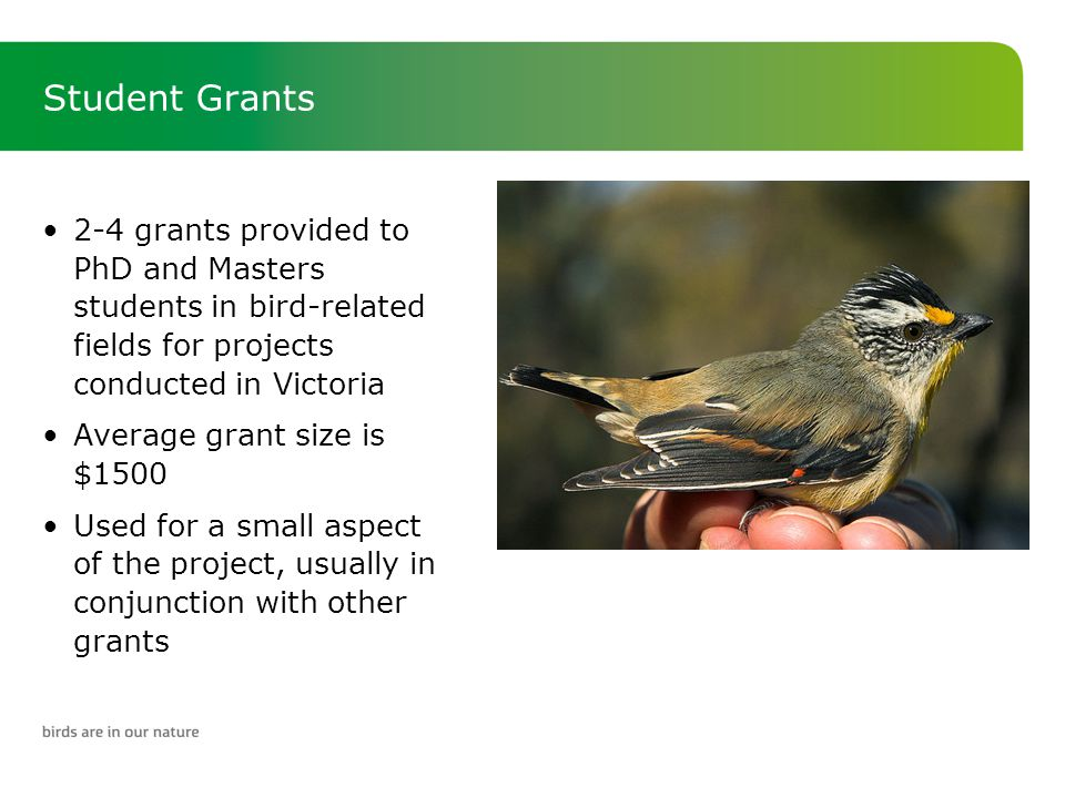 Student Grants 2-4 grants provided to PhD and Masters students in bird-related fields for projects conducted in Victoria Average grant size is $1500 Used for a small aspect of the project, usually in conjunction with other grants
