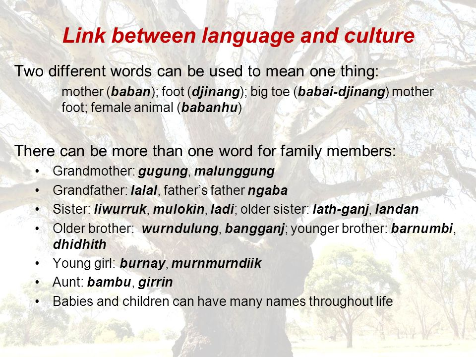 Link between language and culture Two different words can be used to mean one thing: mother (baban); foot (djinang); big toe (babai-djinang) mother foot; female animal (babanhu) There can be more than one word for family members: Grandmother: gugung, malunggung Grandfather: lalal, father's father ngaba Sister: liwurruk, mulokin, ladi; older sister: lath-ganj, landan Older brother: wurndulung, bangganj; younger brother: barnumbi, dhidhith Young girl: burnay, murnmurndiik Aunt: bambu, girrin Babies and children can have many names throughout life
