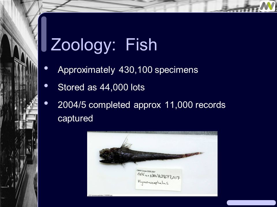 Zoology: Fish Approximately 430,100 specimens Stored as 44,000 lots 2004/5 completed approx 11,000 records captured