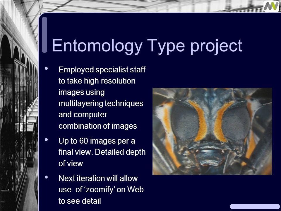 Entomology Type project Employed specialist staff to take high resolution images using multilayering techniques and computer combination of images Up to 60 images per a final view.