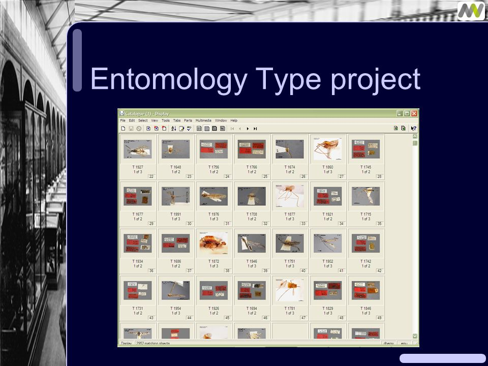 Entomology Type project