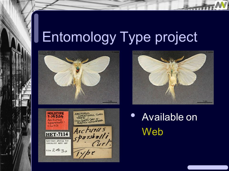 Entomology Type project Available on Web