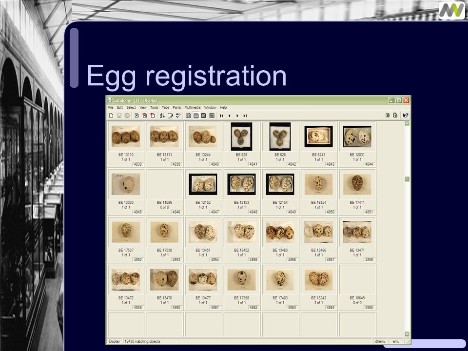 Egg registration
