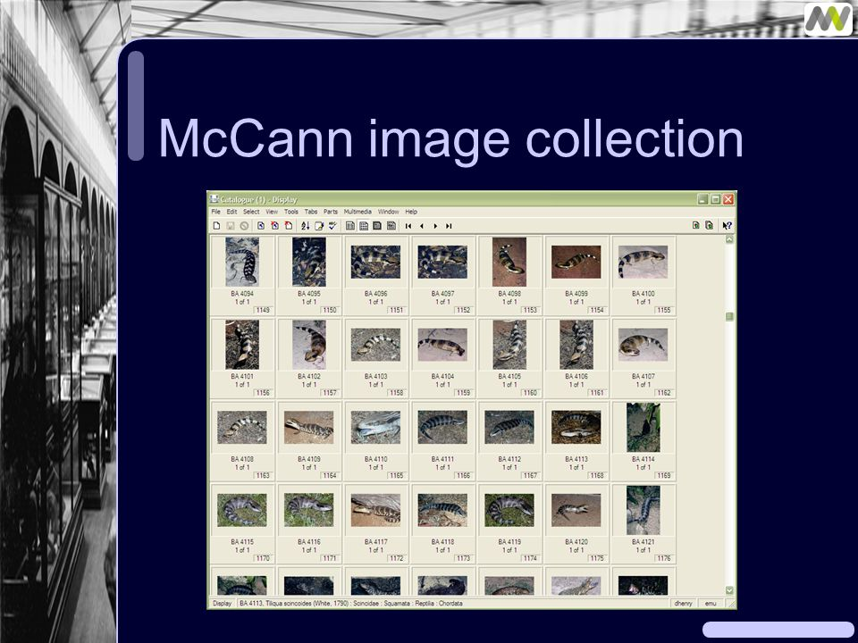 McCann image collection