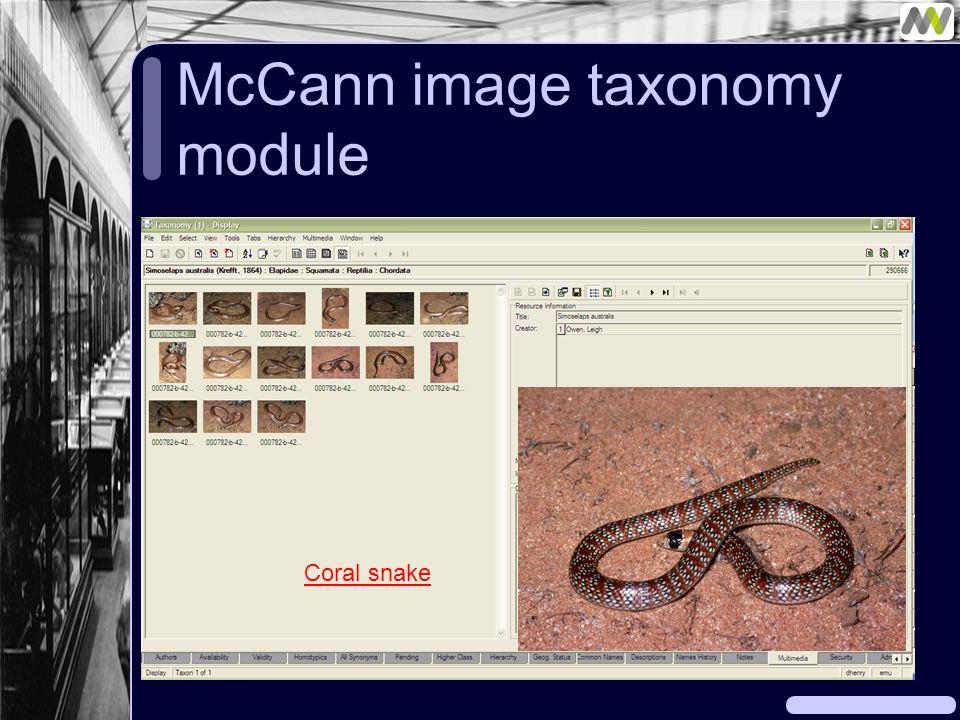 McCann image taxonomy module Coral snake