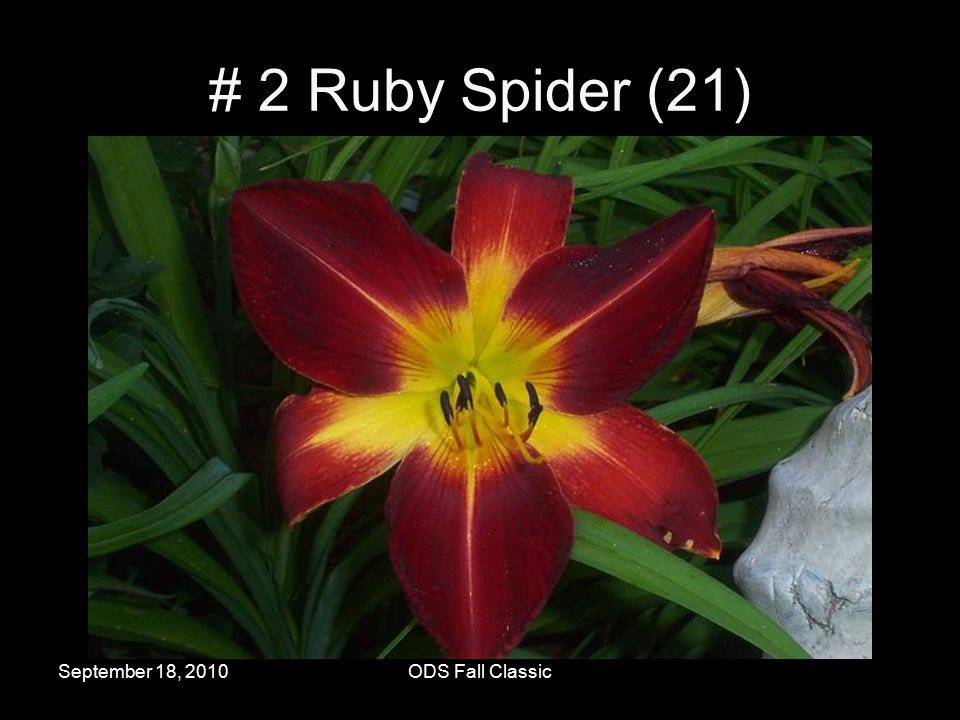 September 18, 2010ODS Fall Classic # 2 Ruby Spider (21)