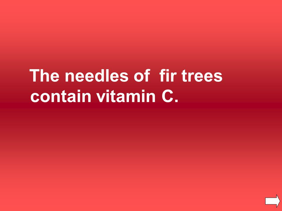 The needles of fir trees contain vitamin C.