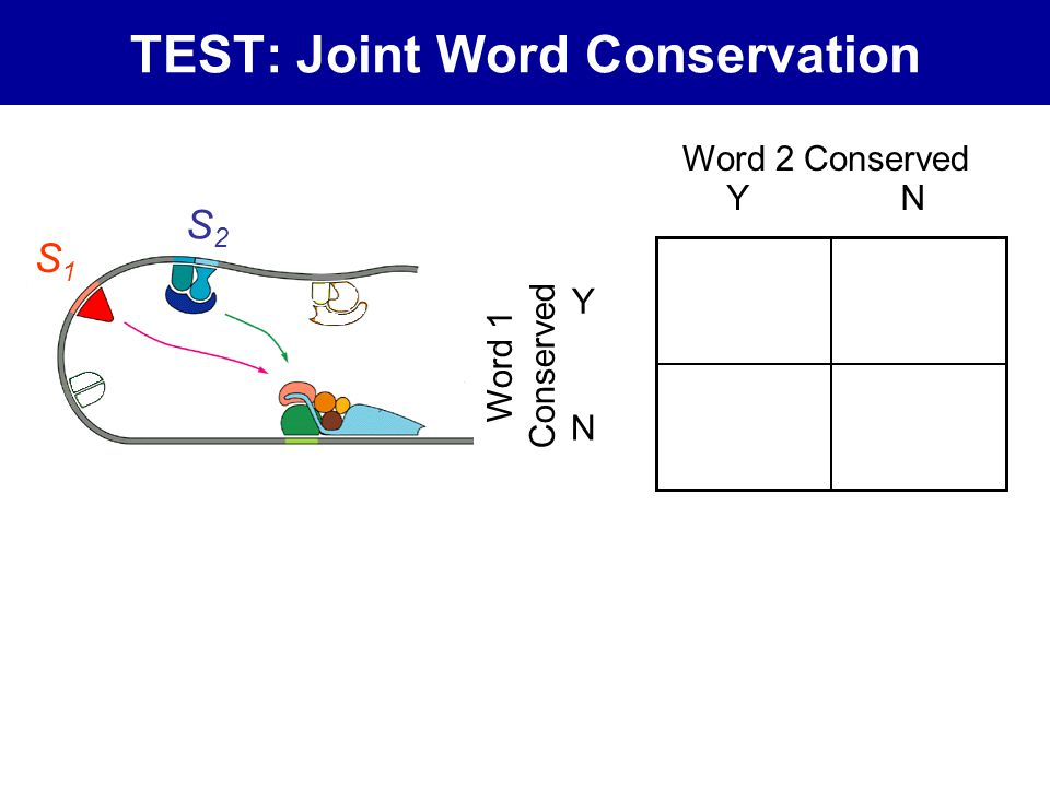 TEST: Joint Word Conservation Word 2 Conserved Word 1 Conserved Y Y N N S1S1 S2S2