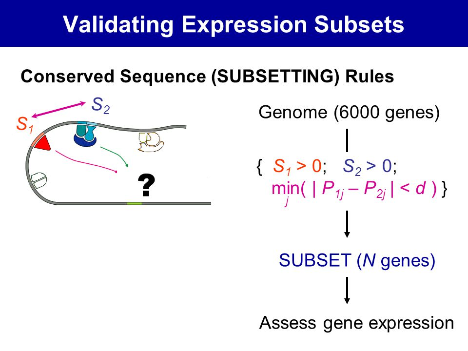 Validating Expression Subsets { S 1 > 0; S 2 > 0; min( | P 1j – P 2j | < d ) } S1S1 S2S2 j Conserved Sequence (SUBSETTING) Rules .