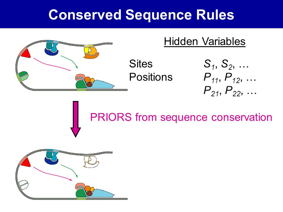 Conserved Sequence Rules Hidden Variables Sites S 1, S 2, … PositionsP 11, P 12, … P 21, P 22, … PRIORS from sequence conservation