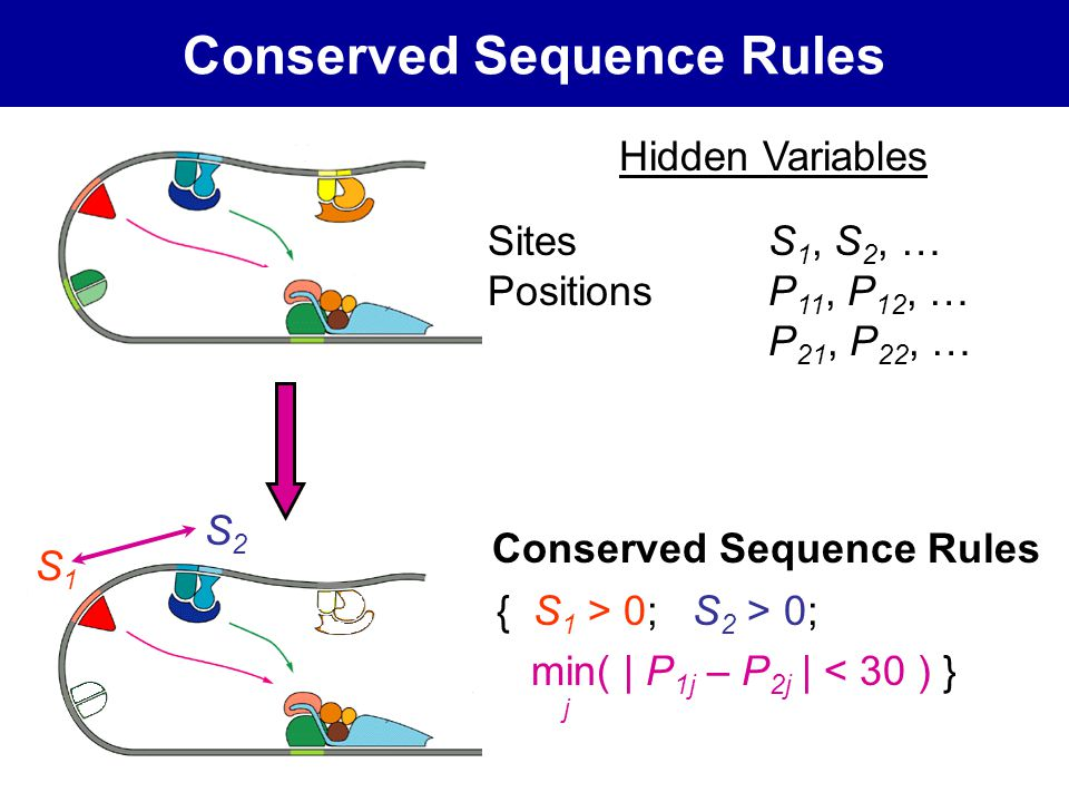 Conserved Sequence Rules Hidden Variables Sites S 1, S 2, … PositionsP 11, P 12, … P 21, P 22, … { S 1 > 0; S 2 > 0; min( | P 1j – P 2j | < 30 ) } S1S1 S2S2 j