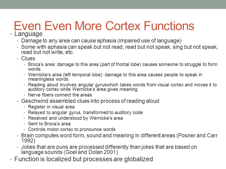 Even Even More Cortex Functions Language Damage to any area can cause aphasia (impaired use of language) Some with aphasia can speak but not read, read but not speak, sing but not speak, read but not write, etc.