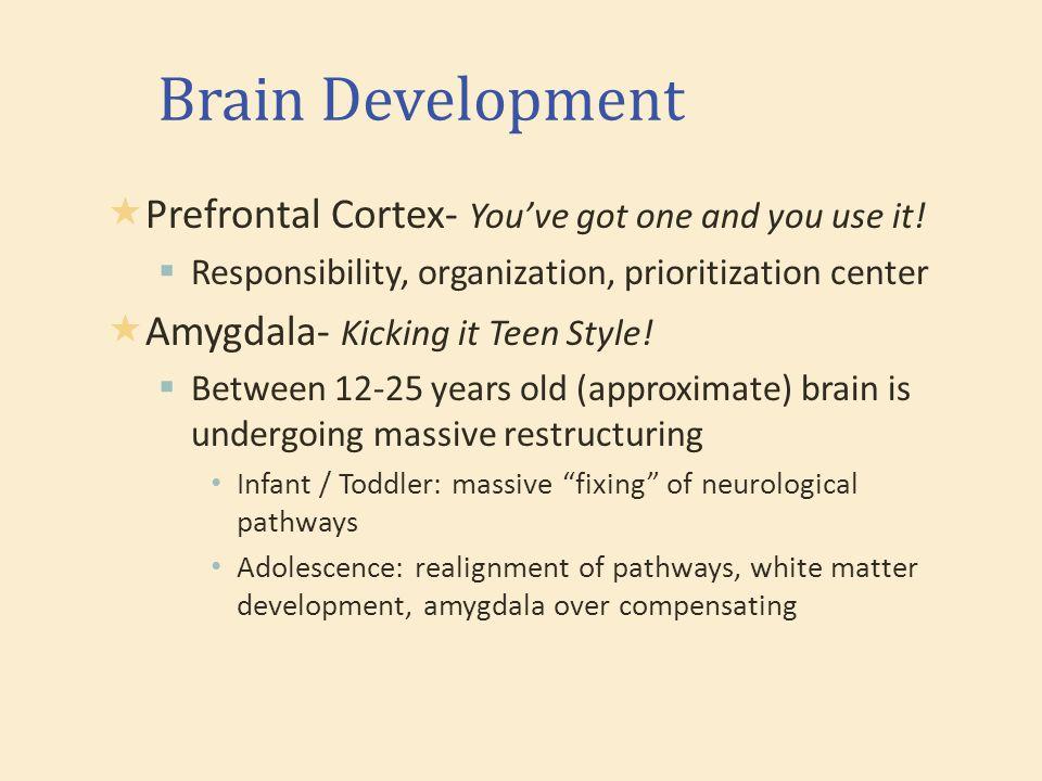 Brain Development  Prefrontal Cortex- You've got one and you use it.