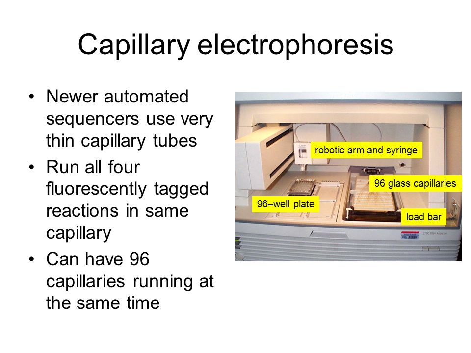 Capillary electrophoresis Newer automated sequencers use very thin capillary tubes Run all four fluorescently tagged reactions in same capillary Can have 96 capillaries running at the same time 96–well plate robotic arm and syringe 96 glass capillaries load bar