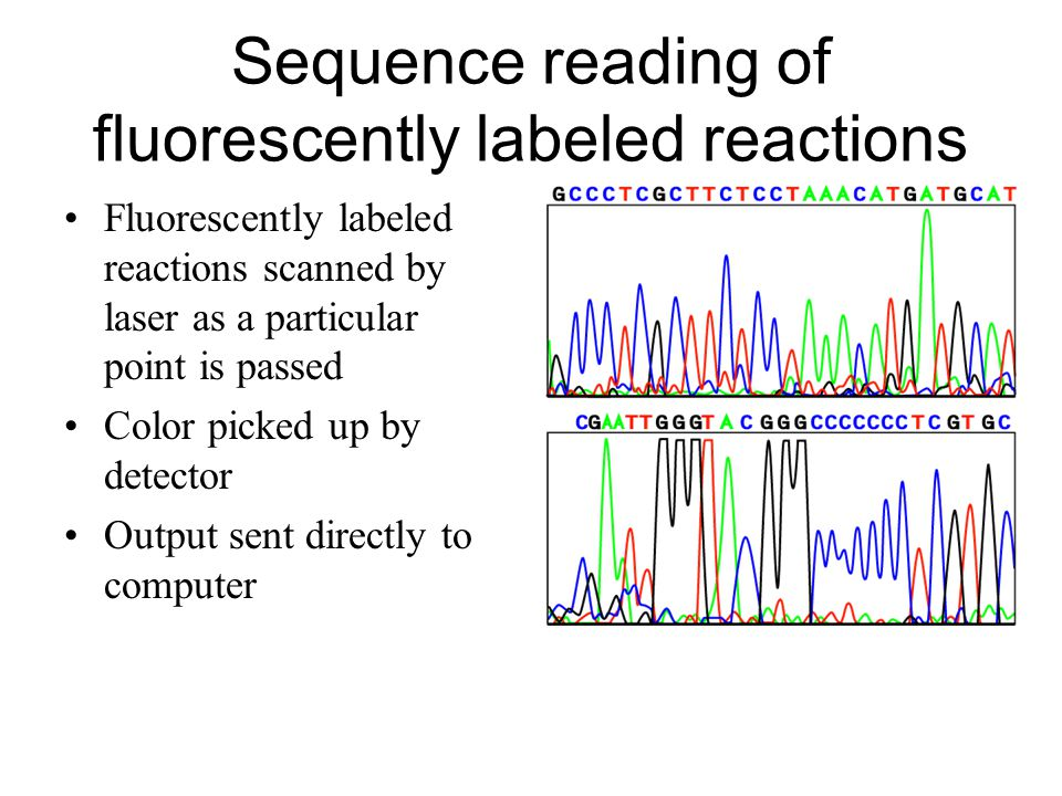Sequence reading of fluorescently labeled reactions Fluorescently labeled reactions scanned by laser as a particular point is passed Color picked up by detector Output sent directly to computer