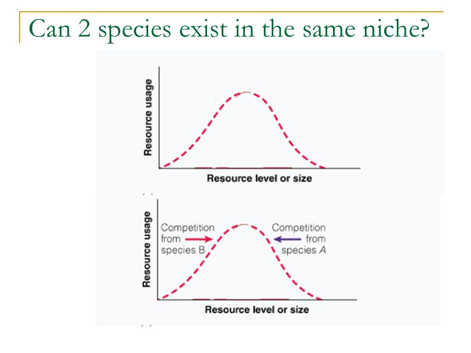 Can 2 species exist in the same niche?