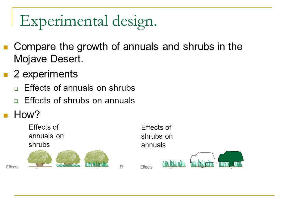 Experimental design. Compare the growth of annuals and shrubs in the Mojave Desert. 2 experiments  Effects of annuals on shrubs  Effects of shrubs o