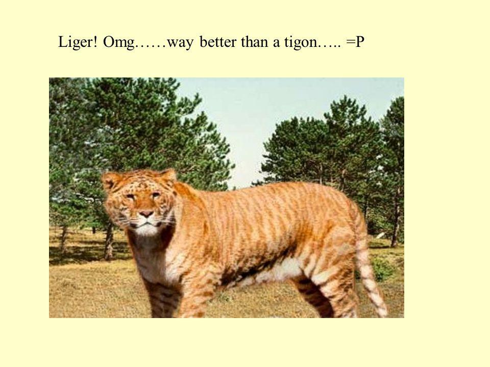 Liger! Omg……way better than a tigon….. =P