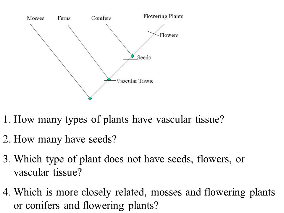 1.How many types of plants have vascular tissue. 2.How many have seeds.
