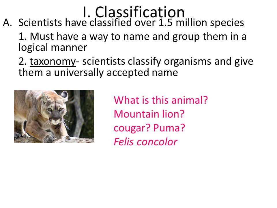 I. Classification A.Scientists have classified over 1.5 million species 1.
