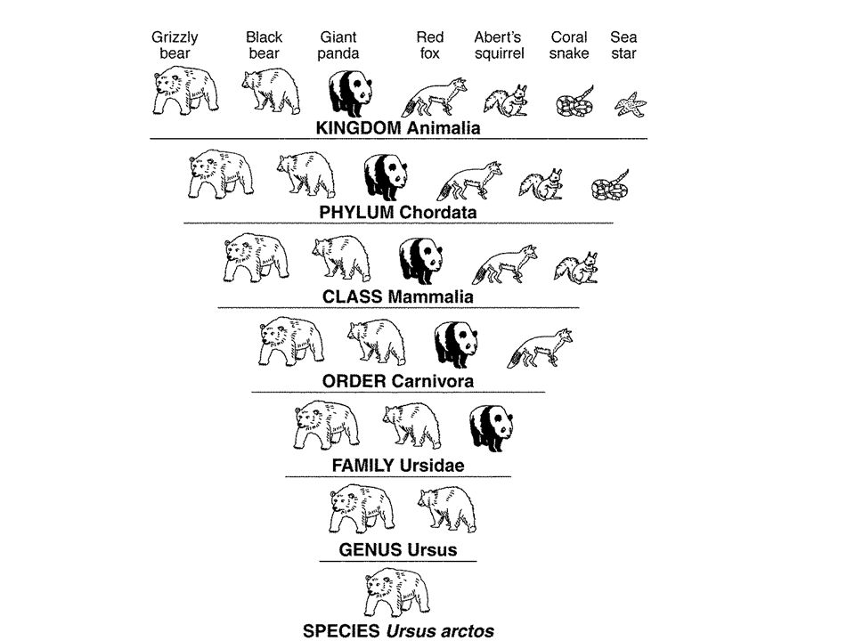 Organism 1: Eukaryotic, autotroph, ex: grass Organism 2: Prokaryotic, lives in extreme conditions Organism 3: Eukaryotic, heterotroph, absorbs food through body Organism 4: Prokaryotic, unicellular, ex: e-coli Organism 5: Eukaryotic, multicellular, heterotroph Organism 6: Eukaryotic, uni or multicellular, ex: amoeba