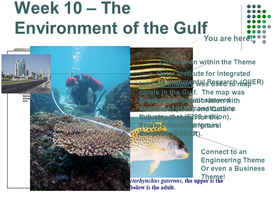 Week 10 – The Environment of the Gulf Did you know.